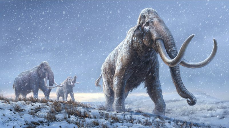 Three huge, hairy elephant-like animals with long curved tusks and long trunks, walking through falling snow.