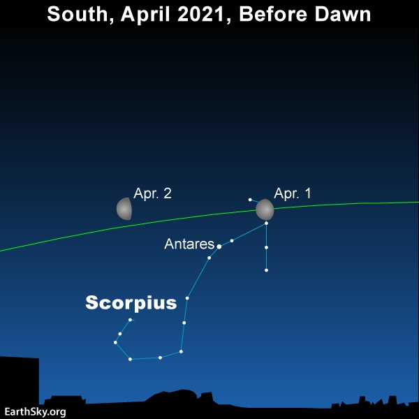 Waning gibbous moon in front of the constellation Scorpius before dawn April 1 and 2, 2021.
