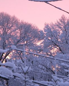 Snow-covered trees against a pink sky background.
