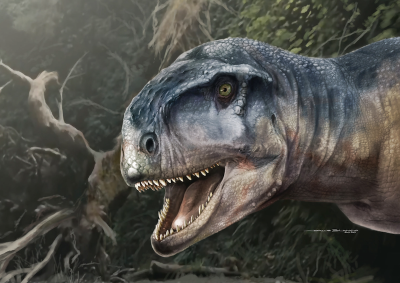 Scaly head of a dinosaur with an open mouth showing lots of big, sharp teeth.