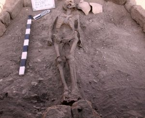 Skeleton lying on dirt surface with meter sticks beside it.