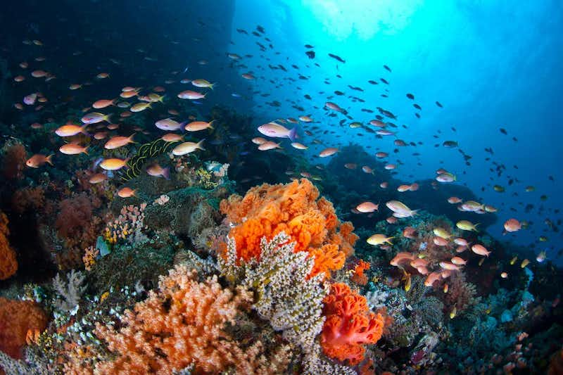 A school of small fish swimming around orange coral.