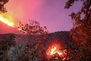 Fiery lava setting a forest on fire under pink smoky sky.