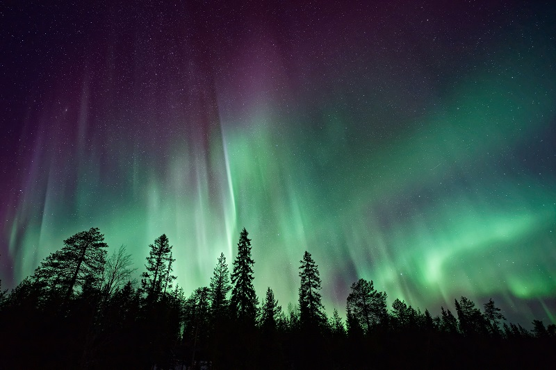 Bright green curtain-like large areas of light shining over evergreen treetops.
