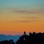 Venus gleaming in a twilight sky, with an owl in silhouette in front of it.