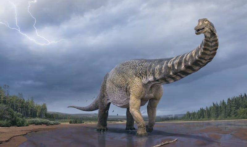 Giant four-legged dinosaur with very long neck, similar to brontosaurus.