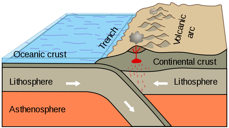 A diagram showing ocean crust from a heavier tectonic plate bent downward as it enters the Earth's  mantle under the lighter tectonic plate over it.