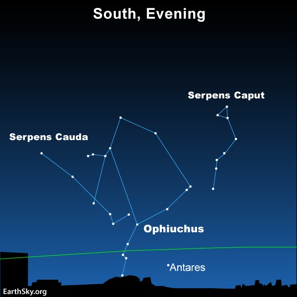 Star chart: Constellation Ophiuchus with parts labeled above red supergiant star Antares.