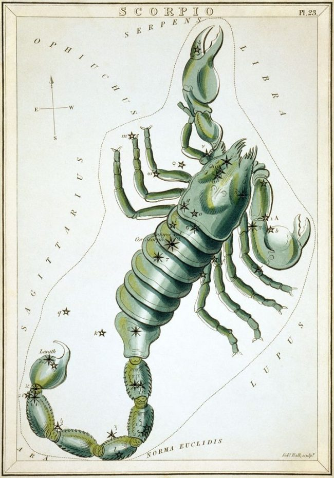 A painting of a bluish-green scorpion with stars marked on it.
