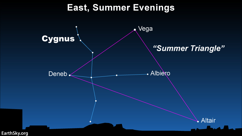 A star showing the Summer Triangle, with Cygnus' constellation - Cygnus the Swan - indicated.