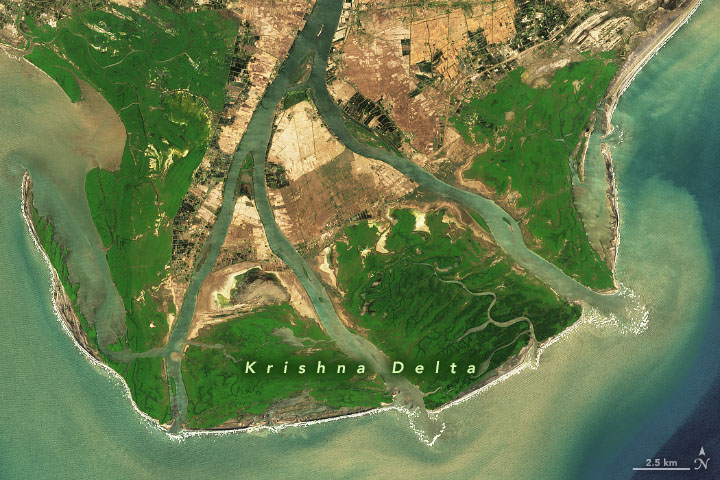 Satellite view of Krishna Delta, a duck foot shaped land form projecting out into water.