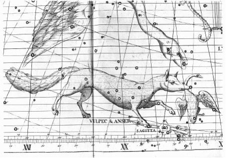 An old star map depicting a fox carrying a goose by the neck. Stars in black on white.