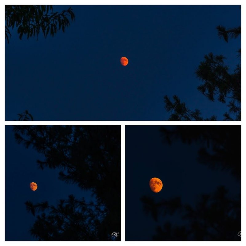 A composite image showing 3 shots of a very red first quarter moon.