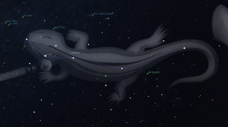 Star chart of Lacerta, with image of lizard in gray and arrangement of stars shaped like a kite.